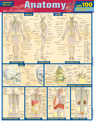 Anatomy quick study guide