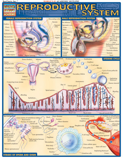Barcharts Reproductive System Quick Study Guide