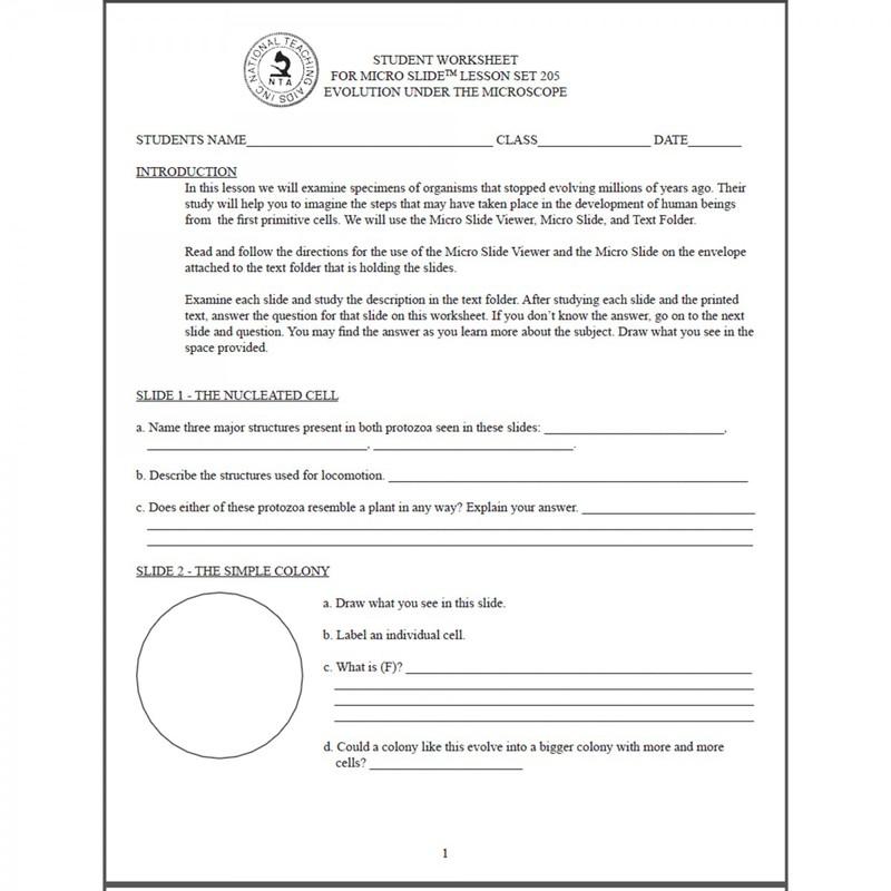 Human evolution worksheets for middle school