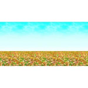 Fadeless design roll 48in x 50ft autumn landscape for 50ft garden design