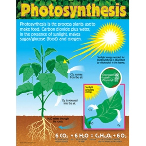 science for kids photosythesis Find and save ideas about photosynthesis activities on pinterest | see more ideas about plant science looking to introduce your kids to more science.