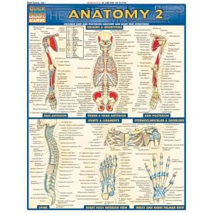 Anatomy quick study guide